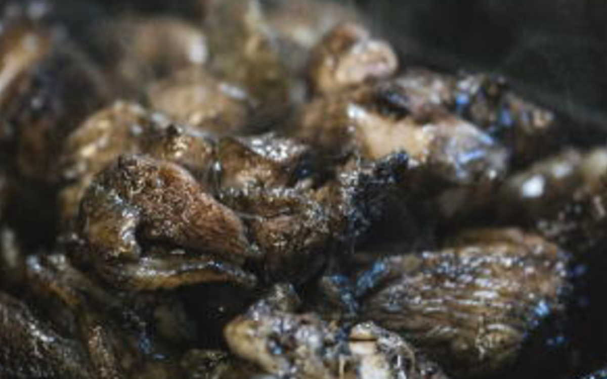 鶏の炭火焼イメージ画像
